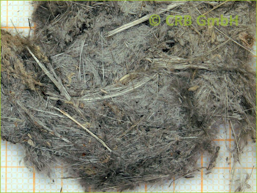 Gut gemocht Begriffe Asbest-Analyse, Röntgenfluoreszenz-Analyse OQ77
