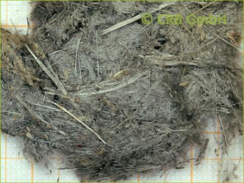 Asbestos test sprayed asbestos - CRB GmbH