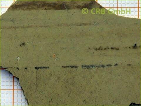 Asbest Analyse Floor Flex Platte Crb Gmbh